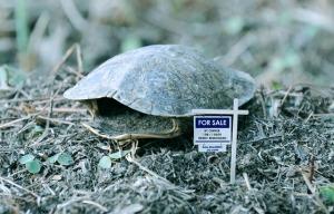TurtleForeclosure