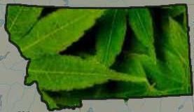 montana-medical-marijuana-pic