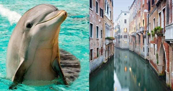 dolphinsinvenice-header
